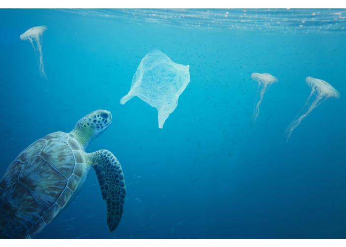 Plastic Pollution: Interesting Facts & Statistics You Didn't Already Know